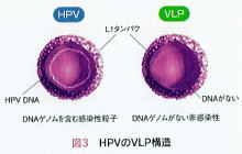 HPVvaccine
